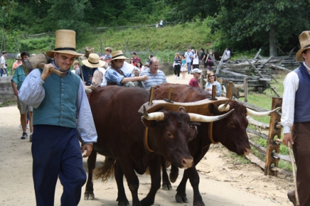 Framers and their bulls - Citizens Procession